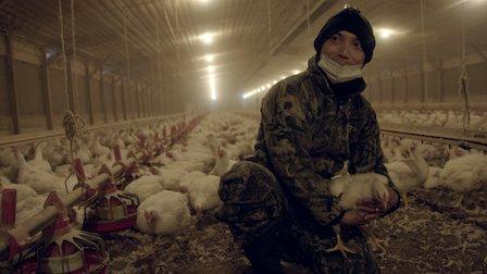 觀賞家禽產業巨頭。第 1 季第 4 集。